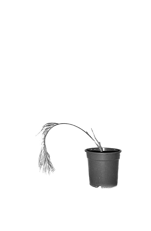 http://www.fritzlichtenwagner.com/files/gimgs/th-4_plant_1.jpg