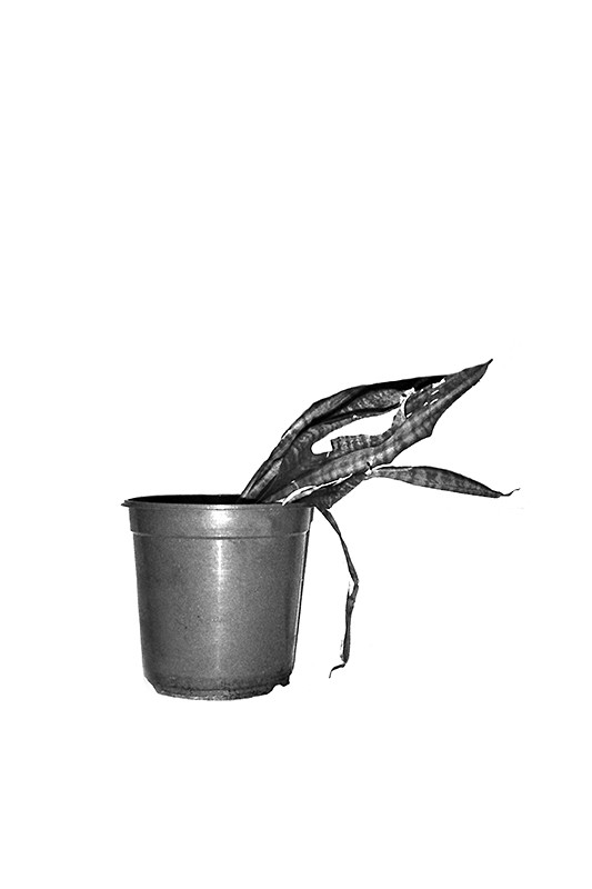 http://www.fritzlichtenwagner.com/files/gimgs/th-4_plant_5.jpg